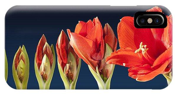 Blossoming Amaryllis Flower IPhone Case