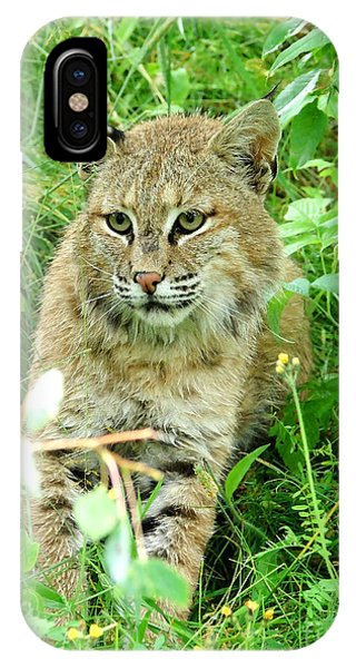 Bobcat Lynk Sitting In Grass Close-up Phone Case by Sylvie Bouchard