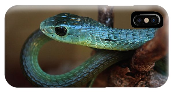 Boomslang IPhone Case