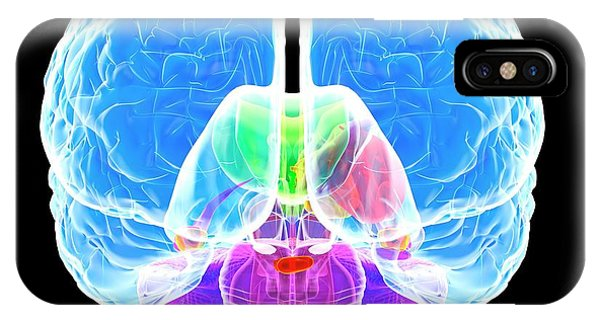 Brain Anatomy Phone Case by Roger Harris