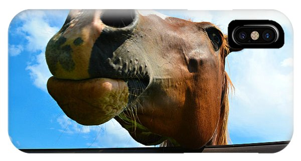 Brown And White Horse IPhone Case
