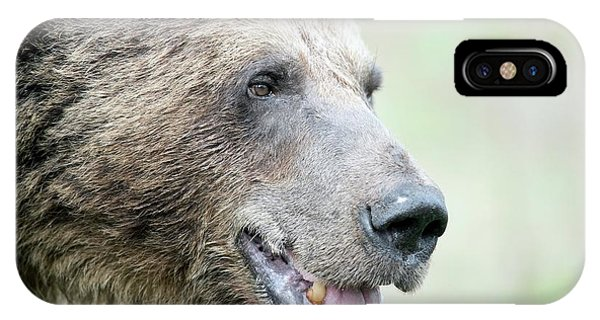 Brown Bear Phone Case by Dr P. Marazzi/science Photo Library