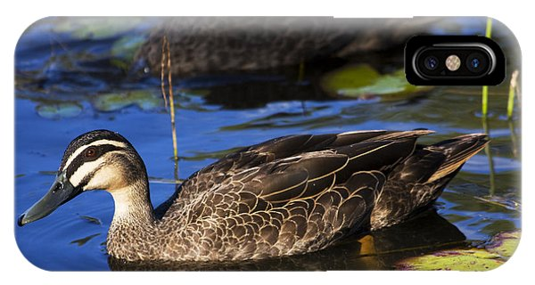 Anas Platyrhynchos iPhone Case - Brown Duck by Jorgo Photography - Wall Art Gallery