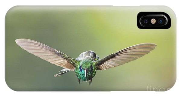 Brown Violet-ear Hummingbird IPhone Case