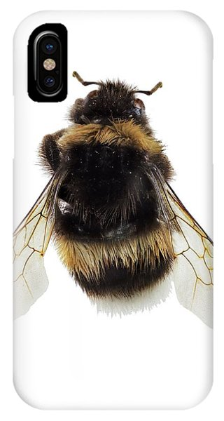 Buff-tailed Bumblebee IPhone Case