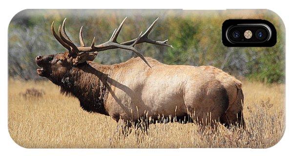 Bugling Bull IPhone Case