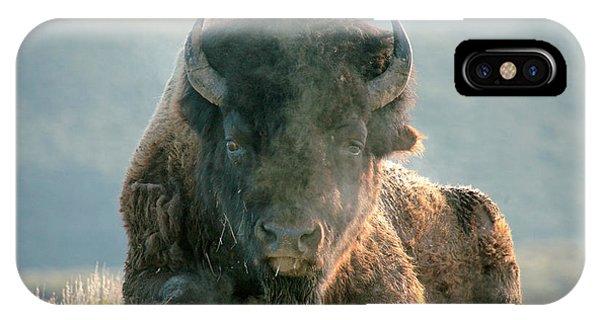 Bull Bison IPhone Case