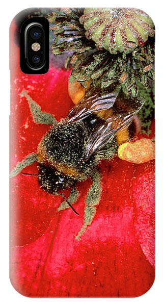 Pollination iPhone Case - Bumblebee Gathering Pollen From Poppy by Dr Jeremy Burgess/science Photo Library