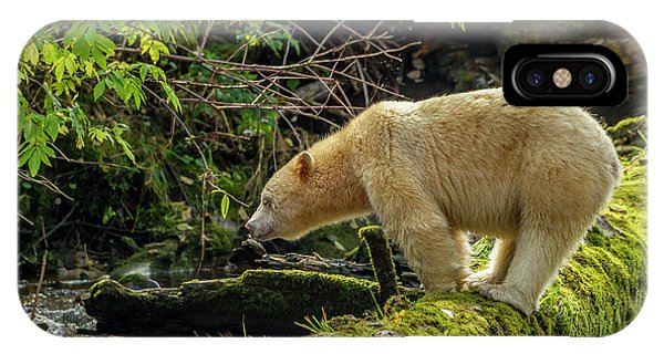 Bear Creek iPhone Case - Canada, British Columbia, Inside Passage by Jaynes Gallery