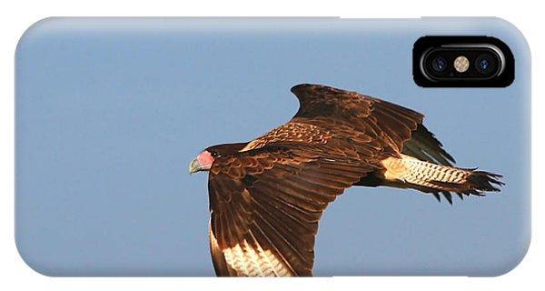 Caracara In Flight IPhone Case