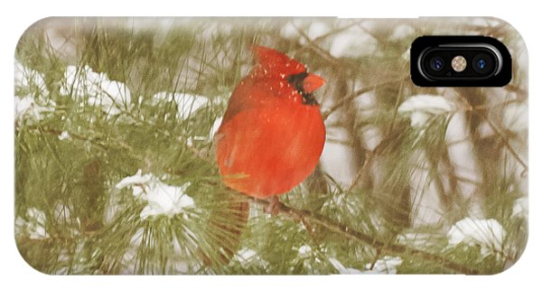 Cardinal In Snow Storm IPhone Case