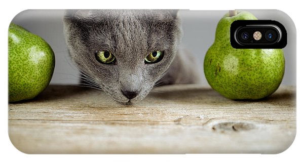 Kitten iPhone Case - Cat And Pears by Nailia Schwarz