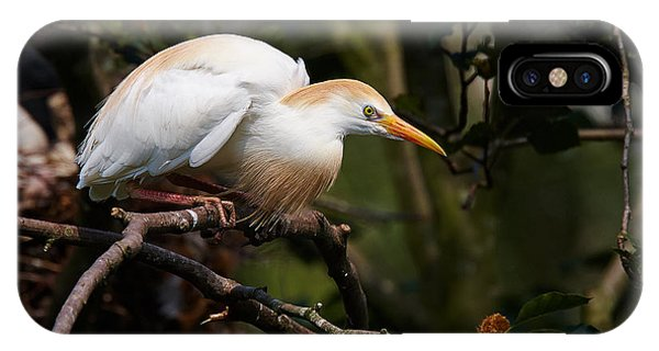 Cattle Egret In A Tree IPhone Case