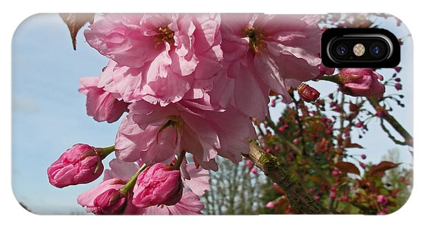 Cherry Blossom Spring IPhone Case