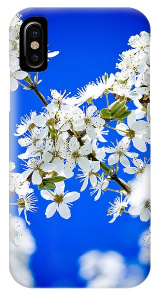 Cherry Blossom With Blue Sky IPhone Case