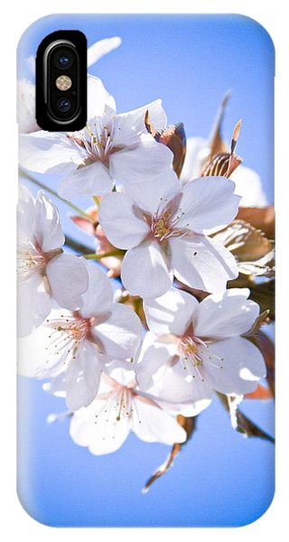 Cherry Tree Blossoms Close Up IPhone Case