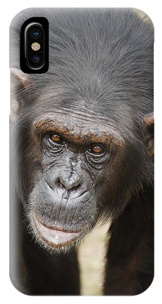 Chimpanzee Portrait Ol Pejeta IPhone Case