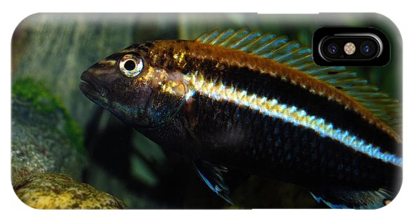 Cichlid IPhone Case