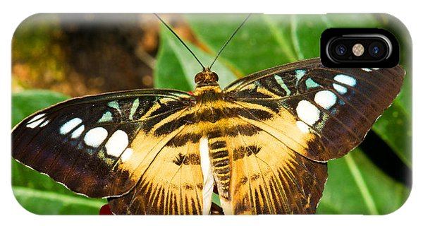 Pterygota iPhone Case - Clipper Butterfly by Millard H. Sharp