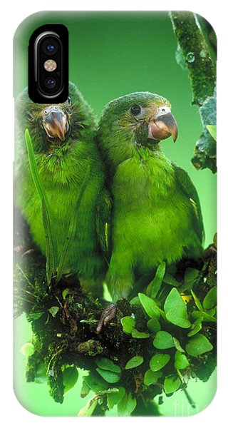 Cobalt-winged Parakeets IPhone Case