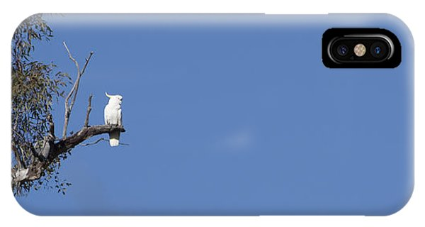Cockatoo - Australia IPhone Case