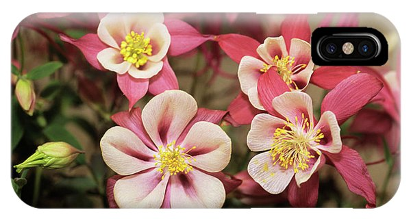 Aquilegia iPhone Case - Columbine Flowers by Adrian Thomas/science Photo Library