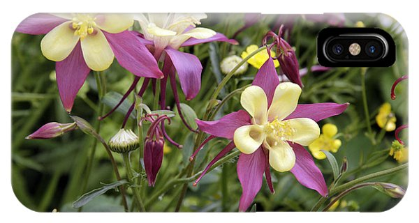 Columbines IPhone Case