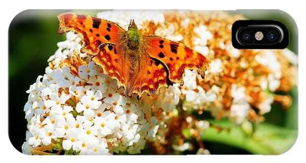 Comma Butterfly IPhone Case