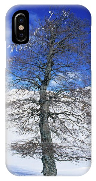 Common Beech Tree (fagus Sylvatica) Phone Case by Bruno Petriglia/science Photo Library