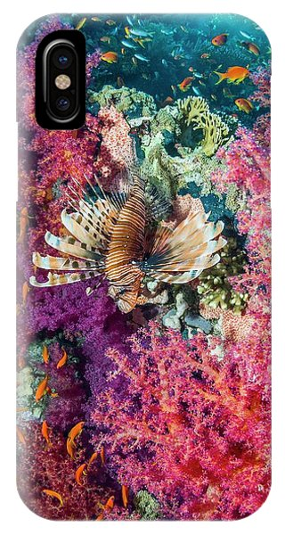 Ichthyology iPhone Case - Common Lionfish Hunting A Reef by Georgette Douwma