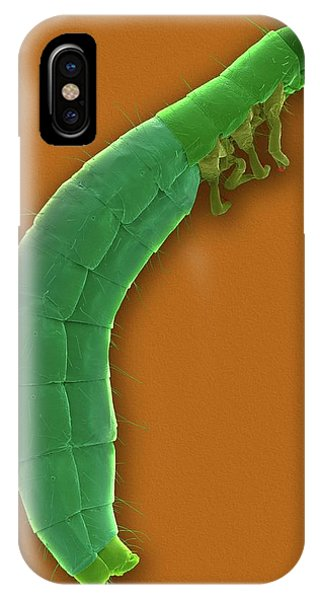 Confused Flour Beetle Larva Phone Case by Dennis Kunkel Microscopy/science Photo Library