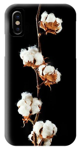 Upland iPhone Case - Cotton (gossypium Hirsutum) Bolls by Gilles Mermet