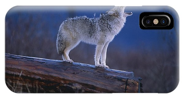 Winter iPhone Case - Coyote Standing On Log Alaska Wildlife by Doug Lindstrand