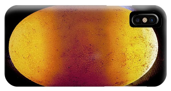 Crocodile iPhone Case - Crocodile Embryo Research by Pascal Goetgheluck/science Photo Library