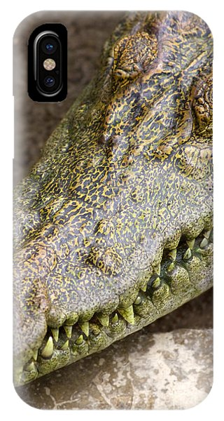 Crocodile iPhone Case - Crocodile by Jorgo Photography - Wall Art Gallery