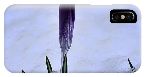 Crocus In Snow IPhone Case