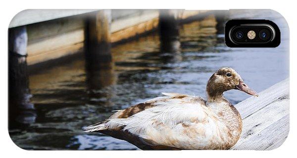 Mallard iPhone Case - Cute Brown Duck Sitting On A Wooden Pier by Jorgo Photography - Wall Art Gallery