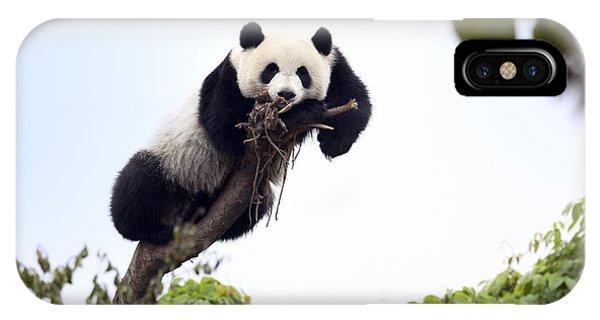 Cute Young Panda IPhone Case