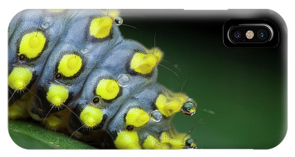 Caterpillar iPhone Case - Cyclosia Caterpillar Secreting Poison by Melvyn Yeo