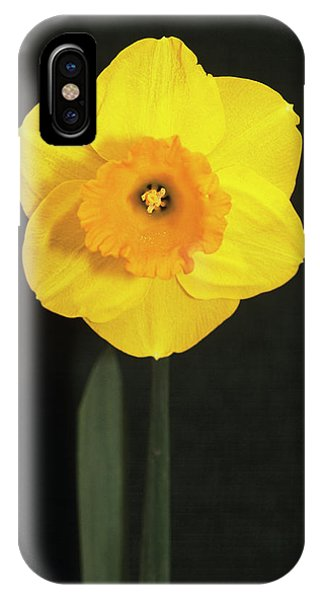 Yellow Trumpet iPhone Case - Daffodil by Adrian Thomas/science Photo Library