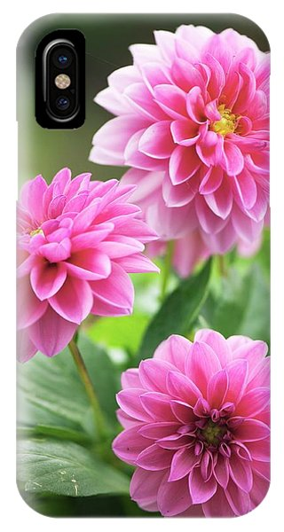 Dahlia Flowers Phone Case by Maria Mosolova/science Photo Library