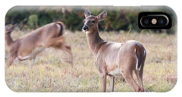 Deer At Paynes Prairie IPhone Case