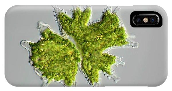 Desmid Zygote IPhone Case