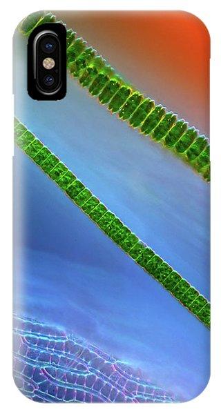 Aquatic Plants iPhone Case - Desmids On Sphagnum Moss by Marek Mis