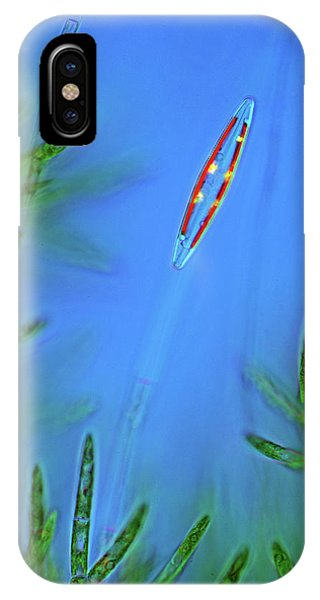Phytoplankton iPhone Case - Diatom And Green Algae by Marek Mis