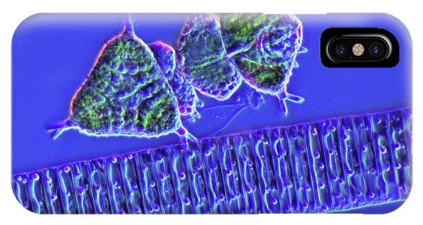 Diatoms iPhone Case - Diatoms And Desmids by Marek Mis