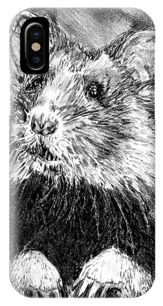 Hamster iPhone Case - Did Someone Say Nuts by J McCombie