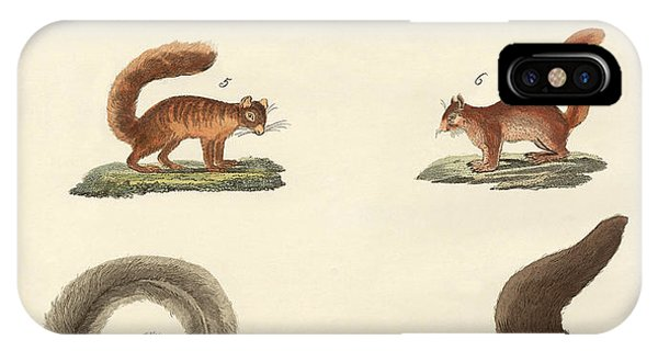 Different Kinds Of Squirrels IPhone Case