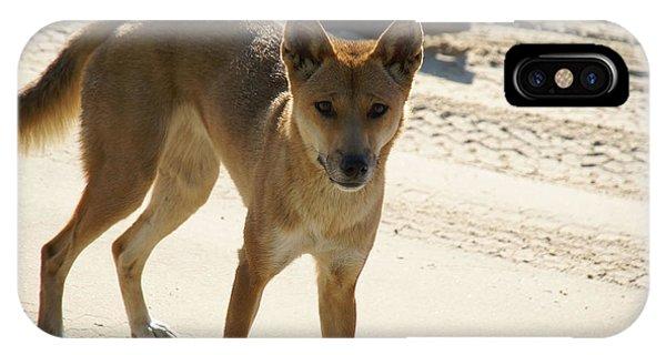 Dingo IPhone Case