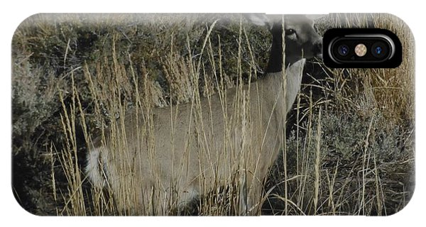Doe Mule Deer IPhone Case